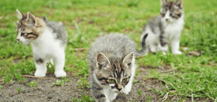 Leading a Prayer Meeting should not be like herding kittens