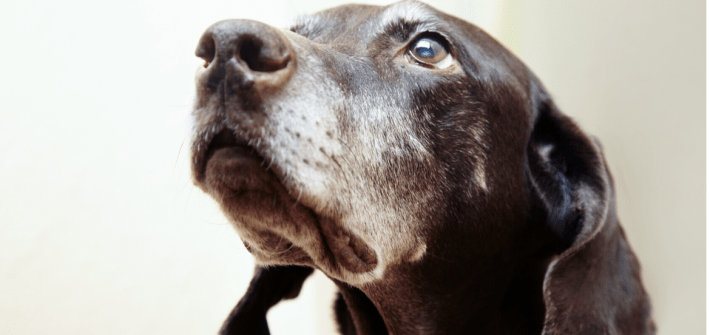 You can teach an old dog new tricks, but only if they are motivated to learn
